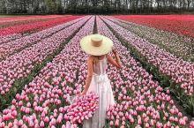 全世界最美好的郁金香花田就在这里,这样拍照最好看!