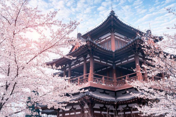 Qinglong Temple1