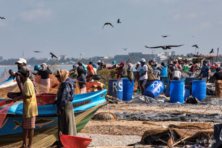 Negombo Central Fish Market1