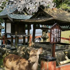 冰室神社旅游景点攻略图