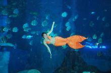 暑假这么好玩的吗?邂逅美人鱼,沉浸极地海洋世界,探索神奇自然科学