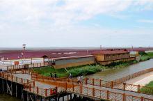 碱蓬草蟹田稻,交相辉映红海滩