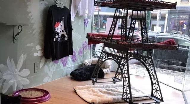 Rocket Cat Cafe2