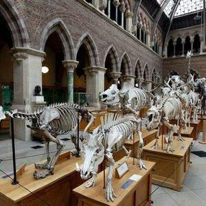 牛津大学自然史博物馆旅游景点攻略图