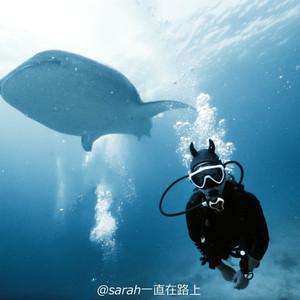 宿务游记图文-菲律宾的小众潜水圣地达拉盖地,我的15天进阶潜水