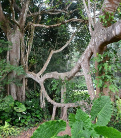 [西双版纳游记图片] 西双版纳,靠近你,温暖我,神奇的热带雨林和迷人的傣家风情