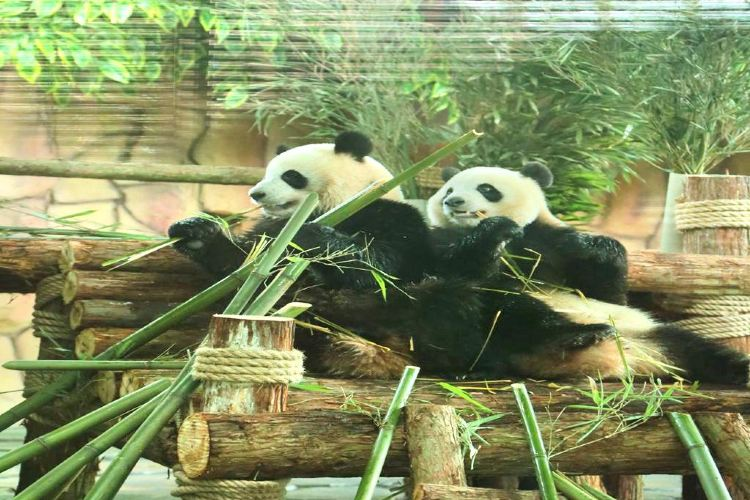 Quanzhou Wildlife Zoo (Quanzhou Wildlife World)