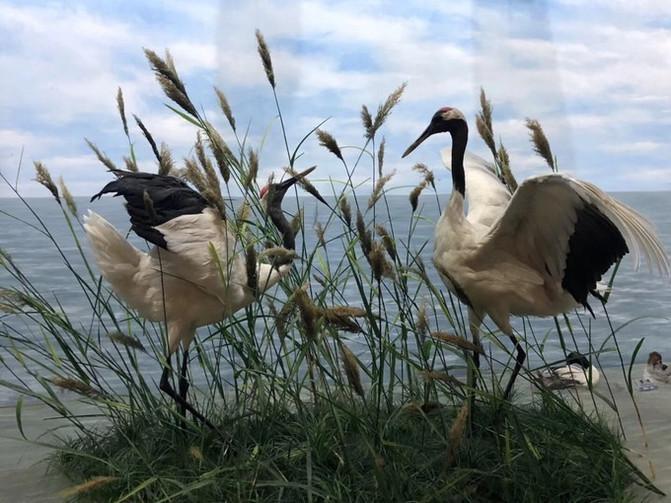 呼伦贝尔大草原 一万个人眼中有一万种呼伦贝尔大草原的秋 – 呼伦贝尔游记攻略插图70