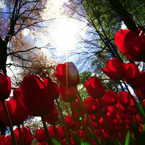 海牙游记图文-15天13城 荷兰比利时春季漫游记