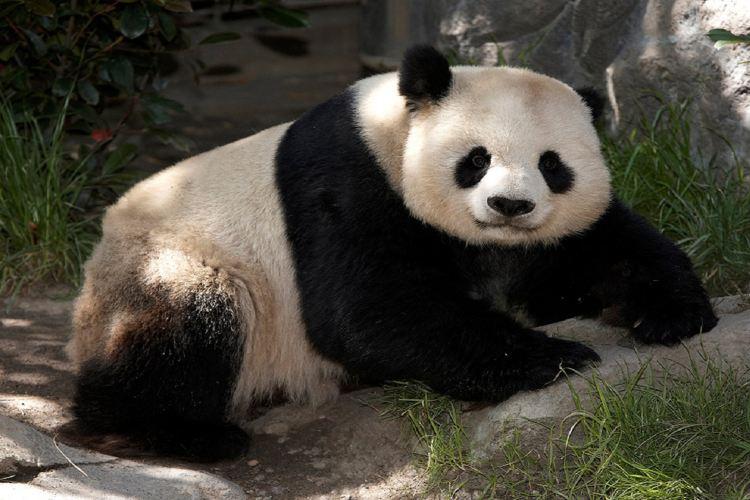 聖地亞哥動物園1