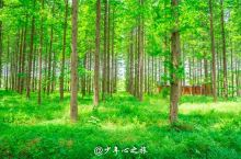华东地区规模最大的人造生态林园