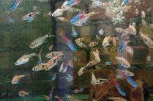 鱼缸里的大世界