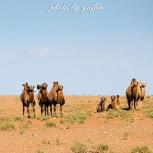 阿巴嘎旗游记图文-是什么让老知青讲到草原就流泪?这里的野生动物曾经比肯尼亚还多