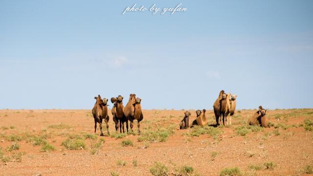 是什么让老知青讲到草原就流泪?这里的野生动物曾经比肯尼亚还多