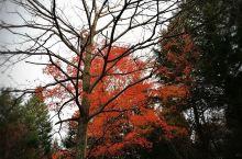 醉美秋色——花山溪谷国家森林公园