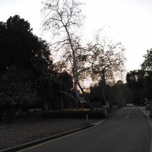 格里菲斯公园旅游景点攻略图