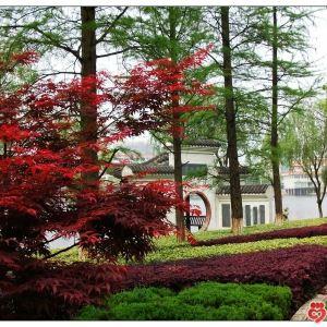 青龙山风景区旅游景点攻略图