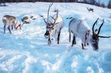 """国内有个冬天美成阿尔卑斯的地方,更从瑞典搬来一座随时消失的ice hotel,超""""冷酷""""!"""