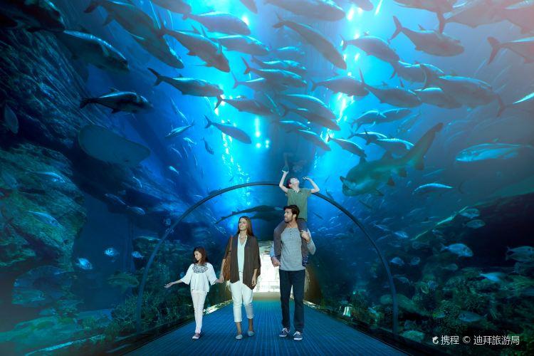 Dubai Aquarium and Underwater Zoo2