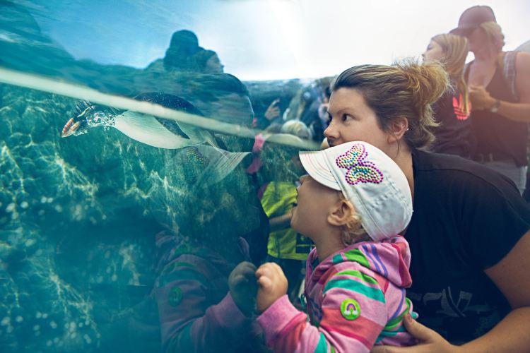 Calgary Zoo4