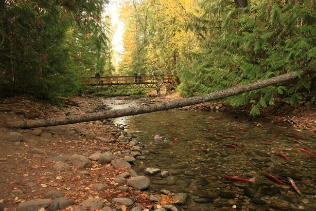 Adams River1