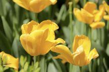 西安 l 春光乍现,踏青赏花就在长安城