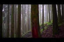 原始森林等待野人,日本·箱根
