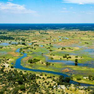 奥卡万戈三角洲野生动物区