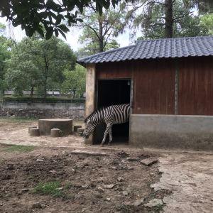 九峰森林动物园旅游景点攻略图