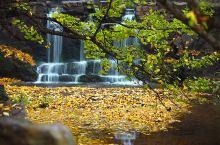 乘着贵昆高铁去看五彩斑斓的秋景,再不出发就晚了!