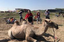 骆驼主人说:不要离得太近,否则…💩