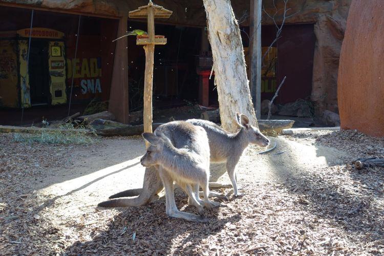 雪梨野生動物園4