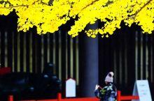 奈良的秋叶