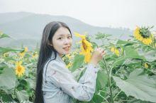 像向日葵一样,做个阳光的女孩