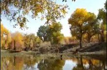 塔里木河胡杨纯天然的美