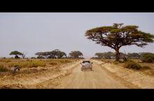 来了肯尼亚,不要错过安博赛利国家公园!