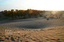 大漠胡杨,如出土文物般见证历史