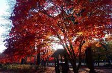 秋紅~2 內藏山,內藏寺門外的景色。 要入場後步行45分鍾才抵達內藏寺或座接駁巴士1000won/6