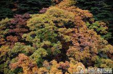 今秋的天堂寨色彩层次分明