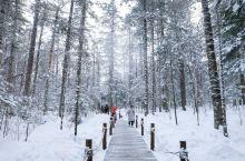 #元旦去哪玩#长白山的原始地下森林