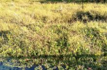 腾冲北海湿地美景
