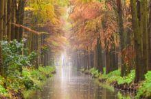 #元旦去哪玩#李中水上森林公园,人在云雾中游