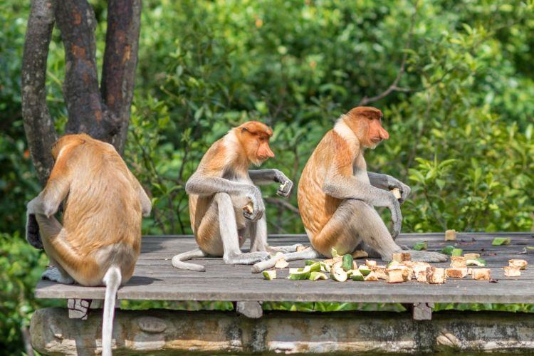 拉蔔灣長鼻猴保護區1