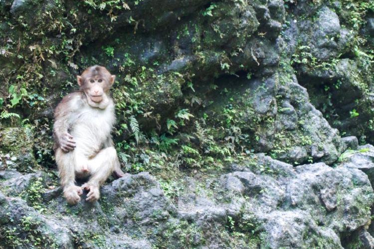 Mt. Emei Natural Ecology Monkey Reserve4