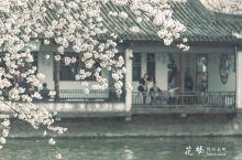樱花季|赏樱只能日本?NO!打飞的去太湖无锡鼋头渚了解一下?