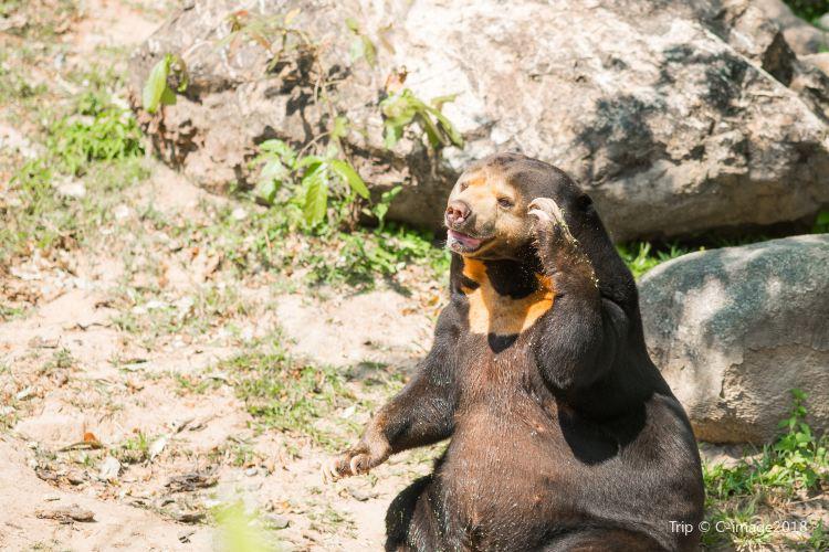 Wellington Zoo1