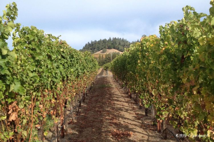 Dry Creek Vineyard1