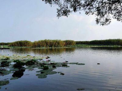 洪湖生態旅遊風景區