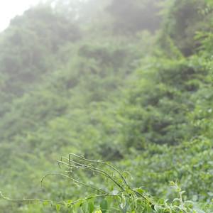 济南游记图文-囧,我的济南之行
