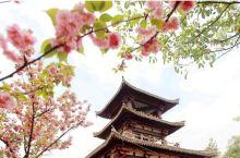 2020成都最新春季赏花攻略 成都市区及周边高颜值春游踏青好去处推荐